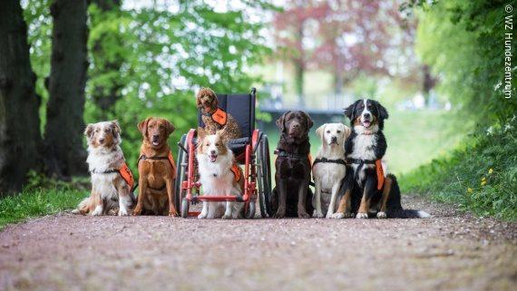 Photo: A bunch of service dogs around a wheelchair; Copyright: WZ Hundezentrum
